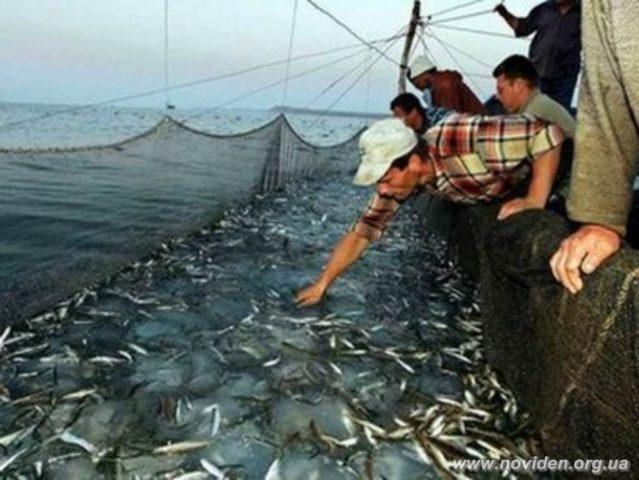 ловля рыбы сетями в черном море
