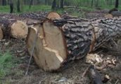 vyrubka-lesa-460x321
